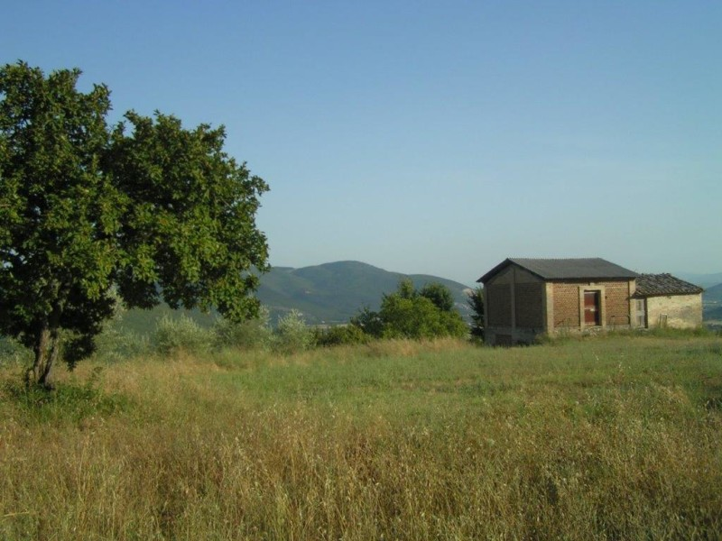 Aziende agricole – Corciano (PG)