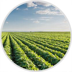 Aziende Agricole/Terreni